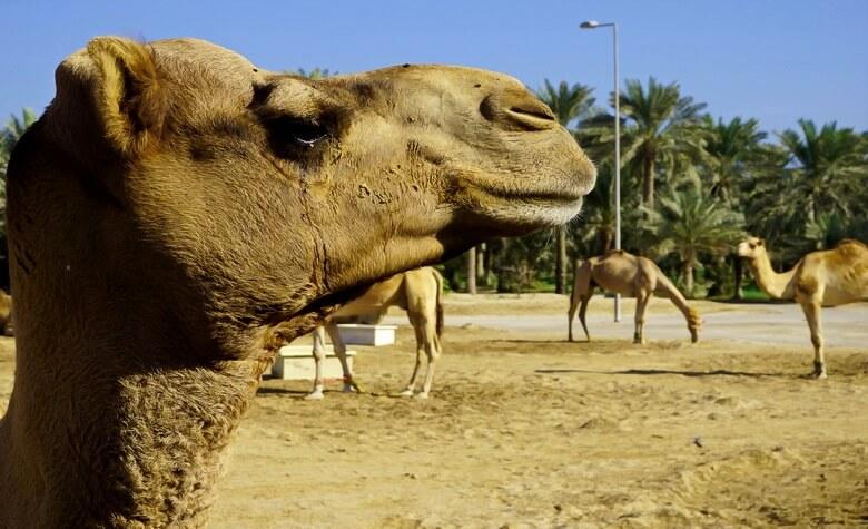 экскурсии в бахрейне